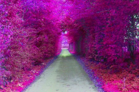 Purple Tunnel - tunnel, amazing, abstract, art, grove, magenta, gray, purple, nice, artwork, awesome, violet, picture, fantasy, colours, foliage, trees, leaf, 3d, cool, wood, beautiful, multicolor, pink, forests, path, view, beauty, trail, photoshop, photo, artistic, foliages, colorful, colors, carpet, leaves, photography, plants, widescreen, image, renderized