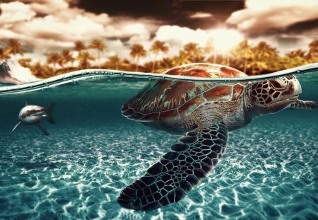 turtle - water, wallpaper, turtle, ocean