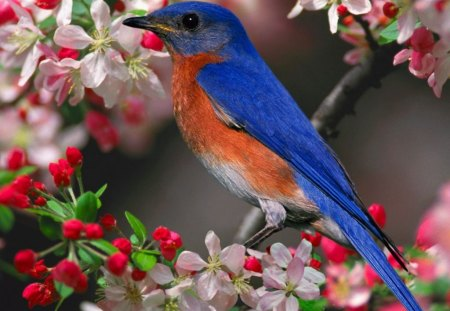 spring - flowers, spring, twig, bird, pink, blue, color, red