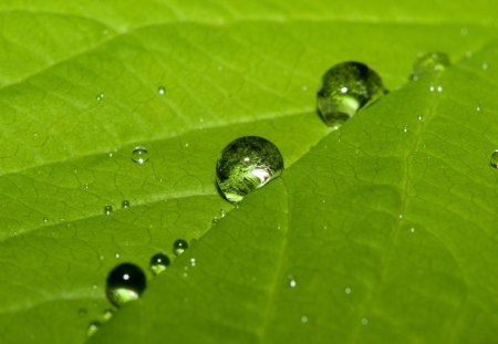 Leaf drops - green, water, reflection, leaf, drops