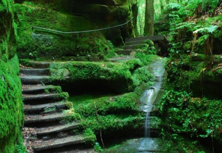 Paradise - steps, forest, waterfall, greenery