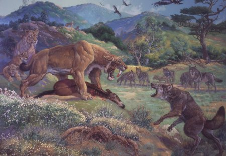 Saber-tooth Tiger  VS.  Dire Wolf - feline, animals, prehistoric, dire wolf, mammals, dog, lions, cat, canine, saber tooth tiger, wolf