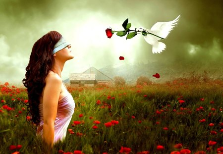 GIFT of LOVE - girl, rose, dove, spring, blindfold, field, messenger