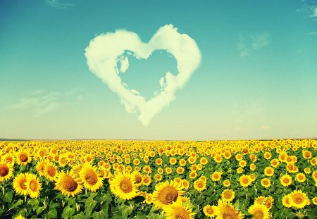 Summer Time - flowers, summer, sky, cloud, blue, heart, yellow, flower, sun
