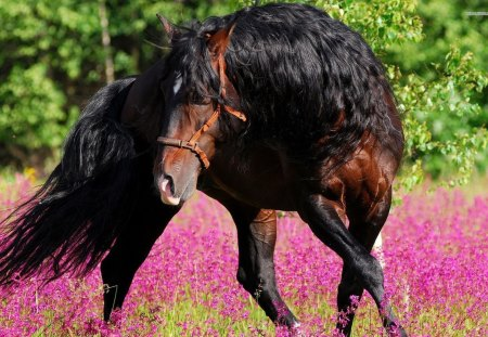 Beautiful Horse - animals, brown horse, mane, horses, flower, nature