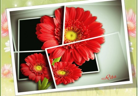 LARGE RED DAISY - OOB! - multiframed, large red, oob, daisy