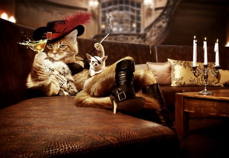Cat musketer - dog, fun, cat, drink, smoking, humor