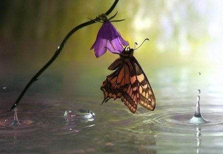 One bloom one butterfly - butterfly, flower, purple, orange, black, rain drops, single