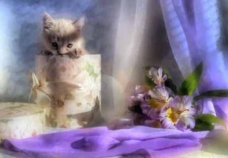 Peek a Boo - still life, elegant, cute, adorable, sweet, kitty