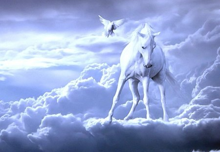 Watching From Above - clouds, white horse, horses, nature, pegasus, fantasy