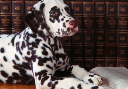 Dog Reading - dogs, spotted dog, pets, puppies, book, funny animals