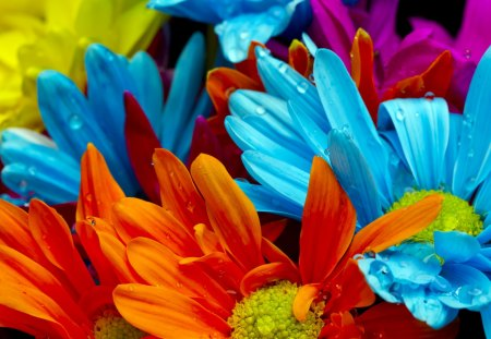 Beautiful Flowers - flowers, petals, beautiful, orange, blooms, blue, pretty, beauty, blossoms, rain, nice, delicate, daisies, drop, colorful, orange flowers, colors, lovely, gerbera, drops, wet, blue flowers, nature, gerberas, buds, daisy