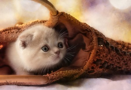 Scared kitty - Cats & Animals Background Wallpapers on ...