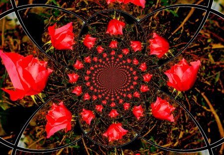 Red roses - fractals, flowers, red, roses