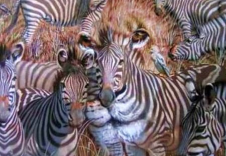 Hidden Lion Among The Zebras - animals, wildlife, lions, zebra, illusions, nature, safari
