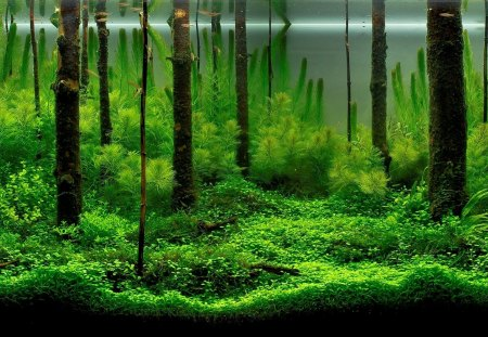 Underwater Forest - goldfish, forests, fish tanks, underwater, aquariums