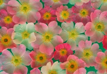 cute flower wall  flowers  nature background wallpapers on, Natural flower