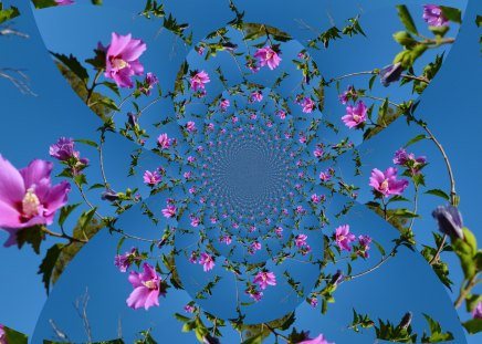 Heavenly Hibiscus - fractals, 3D, sky, heaven, blue, HD, hibiscus