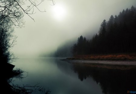 Misty River and Forest