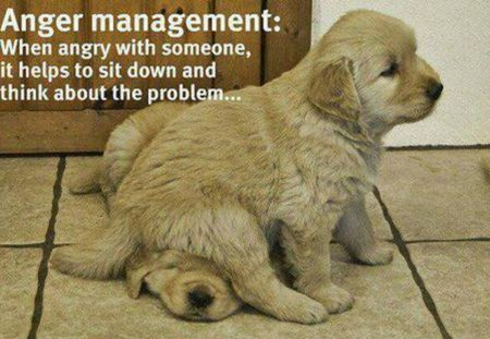 ANGER MANAGEMENT - cute, anger, two, puppies