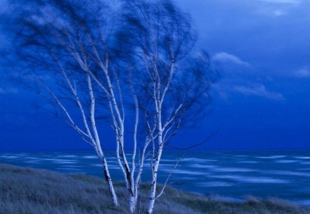 AT WATER'S EDGE - trees, sky, blue, lakes, horizons, blue haze, banks, riverbanks, grass, sea
