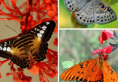 THREE BEAUTIES - butterflies, pretty, beautiful, collage