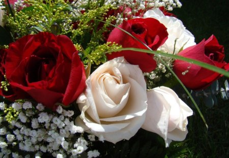 red and white roses flowers amp nature background