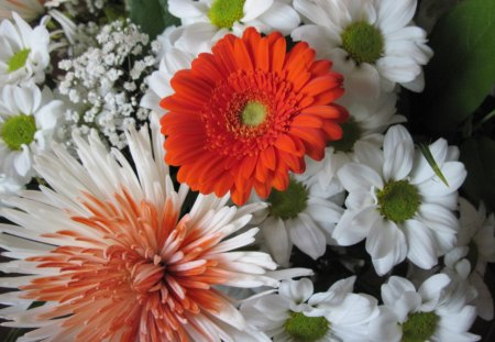 Bouquet of flowers 22 - flowers, photography, orange, white, red, Daisy