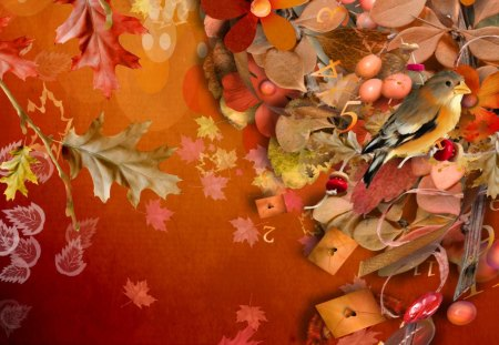 Autumns Time - flowers, orange, colorful, season, nuts, collage, bright, hearts, fall, autumn, buttons, leaves, bird, seeds