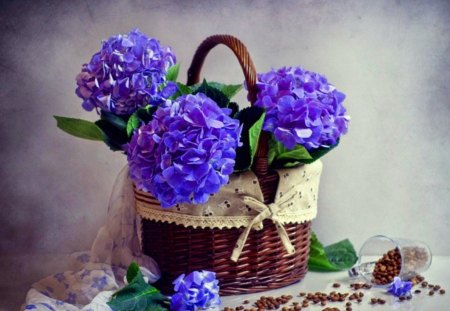 Hydrangea blues - flowers, hydrangea, basket, coffee, blue