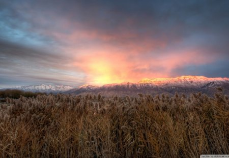 mt. timpanogos in afterglow - sunrise, mountains, clouds, reeds