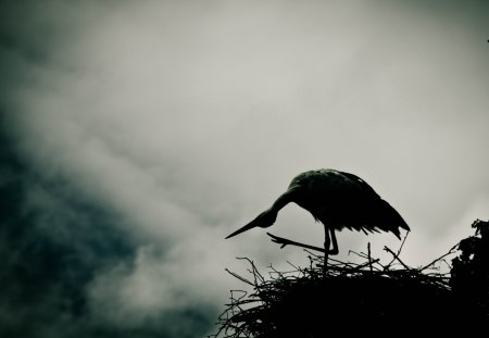 Stork - break of day, evening, little, mist, twilight, nest, tree, haze, break, white, fog, day, black, smoke, stork, high, dawn, bird, dusk