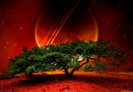NEW PLANET - earth, nature, tree, space, planet, stars