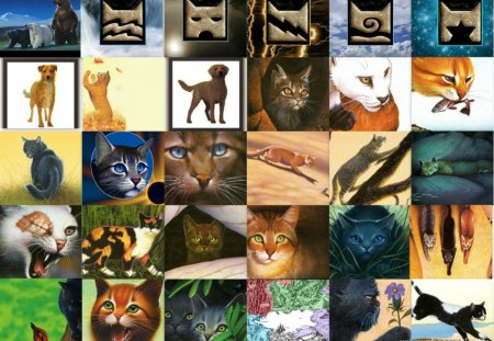 WARRIORS, SEEKERS, AND SURVIVORS - barkroot, leafpool, pets, purdy, dovewing, squirrelflight, ujurak, brightheart, sandstorm, lionblaze, raggedstar, leaders, firestar, crowfeather, onestar, kallik, warriors, bluestar, kits, collage, cats, toklo, medicene cats, millie, hollyleaf, bramblestar, lusa, mistystar, ashfur, ivypool, crookedstar, animals, seekers, breezepelt, littlecloud, clans, graystripe, lucky, cinderpelt, dogs, blackstar, yellowfang, hawkfrost, spottedleaf, tawnypelt, jayfeather, survivors, dark forest, elders, bears, brokenstar, apprentices, tigerstar, tallstar, nature, leopardstar
