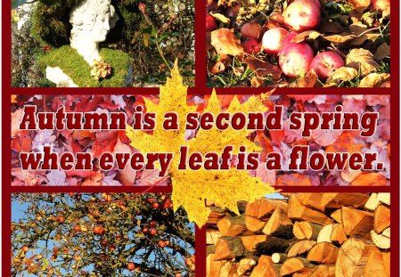 ♥ Autumn Nostalgia ♥ - leaves, nostalgia, wood, abstract, apples, autumn, collages