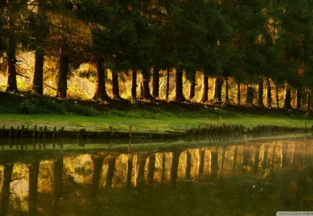 reflection - river, bank, reflection, trees