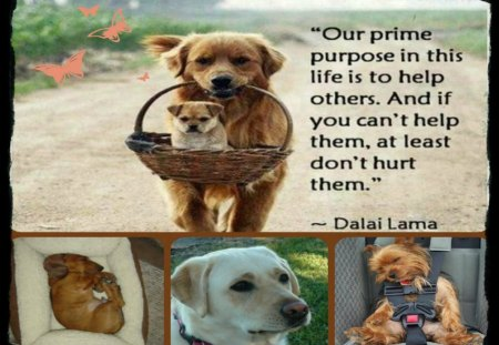 ~~We Care For All ~~ - quote, dogs, animals, collage
