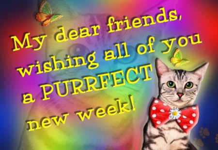 ♥      ღ PURRFECT New Week ღ      ♥ - wishes, purrfect, paws, cat, friends, new week wishes, bow