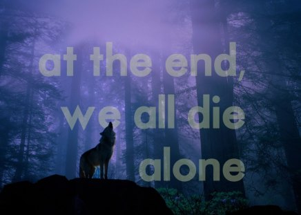quotes,wolves - solitude, wolves, quotes, wolf, forest, howling, despair, andscapes