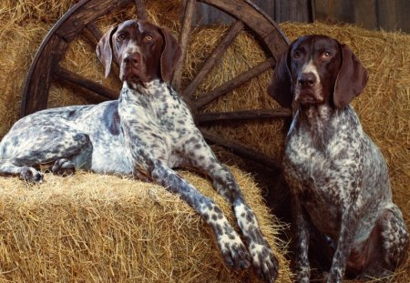 speckled beauties - dogs & animals background wallpapers on