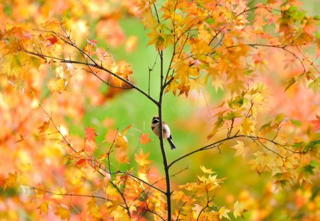 Autumn Tree and Pretty Bird - Other & Nature Background ...