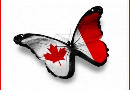 Canadian Butterfly - wings, red, butterfly, flag, canada, white