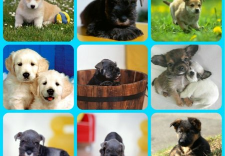 CUTE DOGS - abstract, dogs, puppies, collage