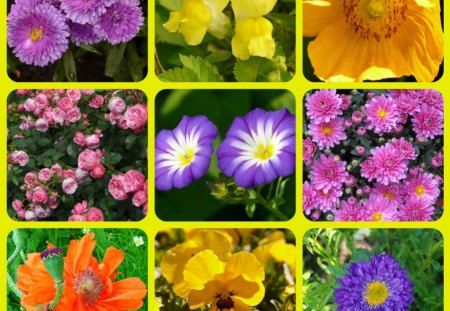 FLOWERS - abstract, flowers, pretty, collage