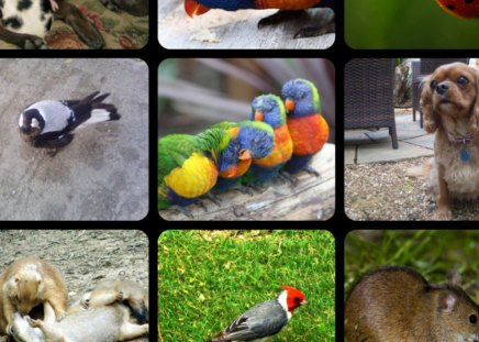 NATURE - nature, animals, collage, birds