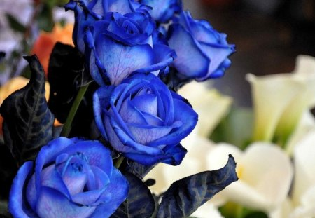SISTERS IN BLUE - blue roses, flowers, blooms, roses