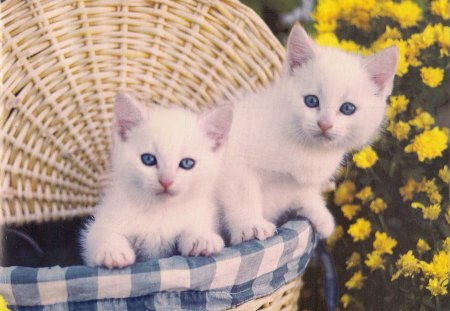 Cute White Kittens In A Basket | www.pixshark.com - Images ...