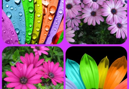 COLOURFUL - flowers, colours, collage, colourful