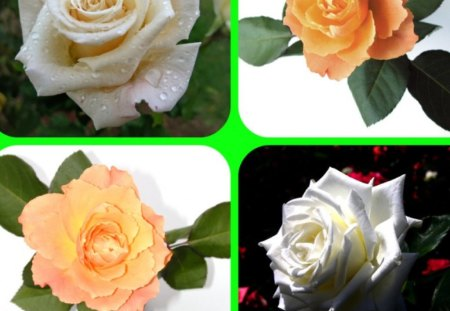 ROSES - flowers, roses, collage, four