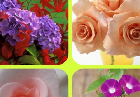FLOWERS - flowers, morning, glory, roses